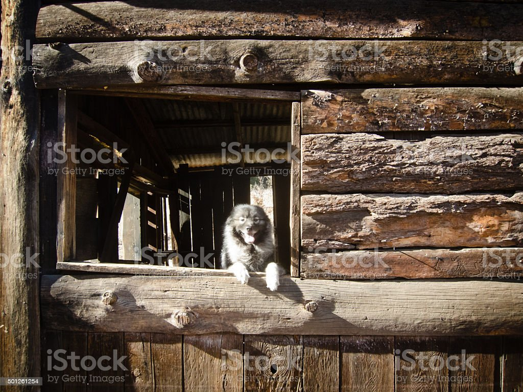 Dog at the window stock photo