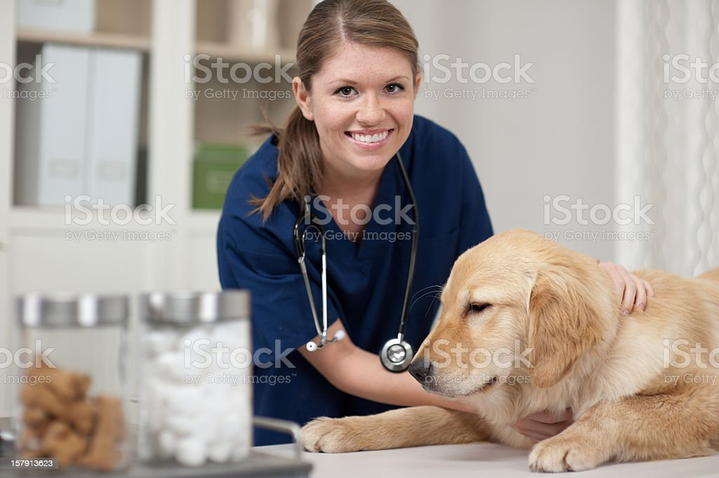 Dog at Vet stock photo