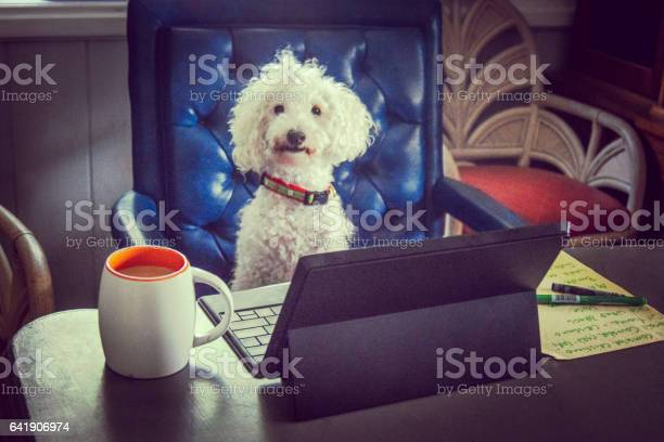 Dog at work picture id641906974?b=1&k=6&m=641906974&s=612x612&h=ml m6iaihb1jivoecos nblvc23c9lia7sbqiykyoua=