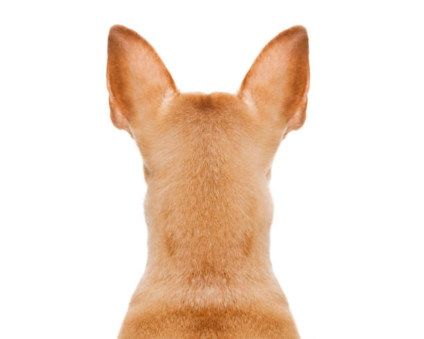 dog back torso stock photo