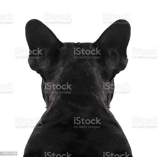 Dog back torso picture id479074008?b=1&k=6&m=479074008&s=612x612&h=pd1 i9zzcyhaqswjzytuholt9 3qisha6rfkiob2 vo=