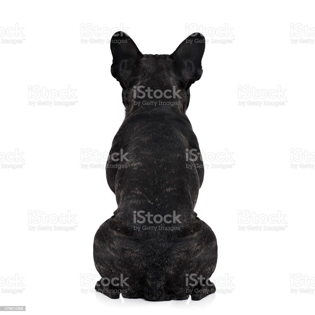 dog back torso stock photo