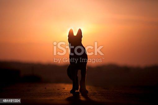 istock Dog backlight silhouette in sunset 484491004