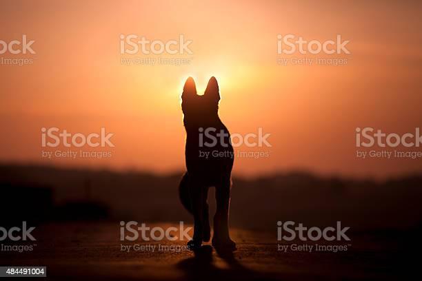 Dog backlight silhouette in sunset picture id484491004?b=1&k=6&m=484491004&s=612x612&h=ztvy8nkzsnw0khd2kziwizutgy15ru ppv0cxsdxfbi=