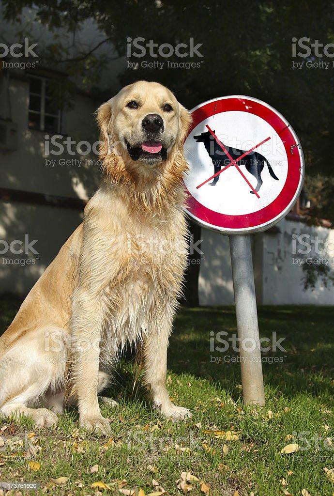 Dog ban stock photo