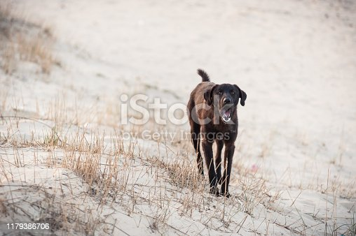 A dog barking on the white sand