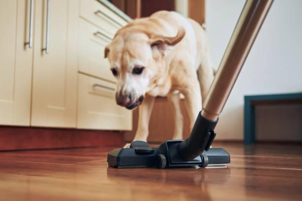 Dog barking on vacuum cleaner stock photo