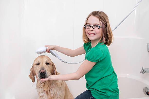 Cão de banheiro - foto de acervo