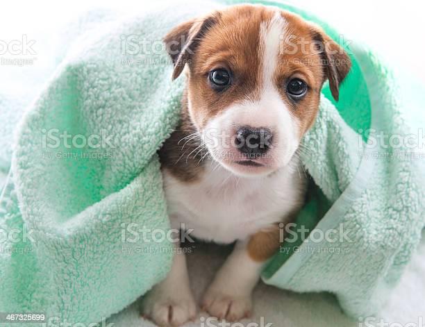 Dog bath towel picture id467325699?b=1&k=6&m=467325699&s=612x612&h= vtczbl8mb5i9sfpvlir7n5p4fdjlg67e4pziyldehy=
