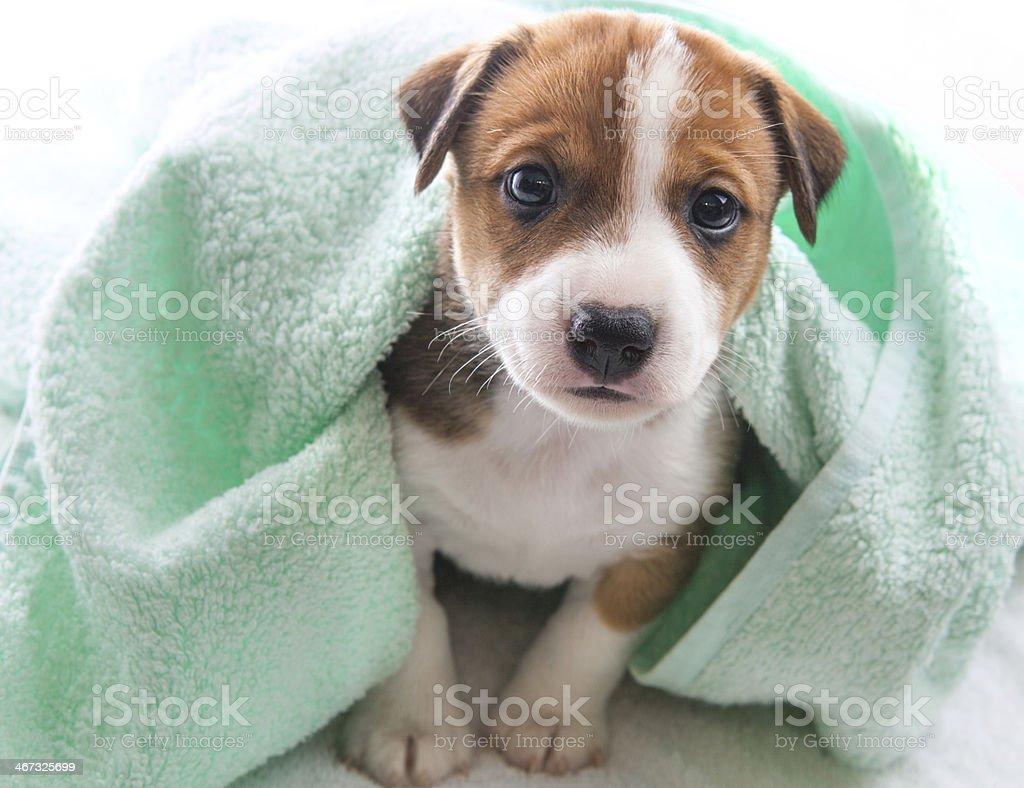 Dog bath towel stock photo