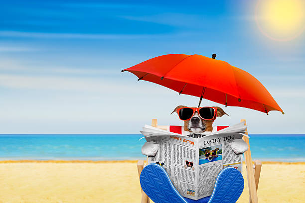 dog beach chair - newspaper beach stockfoto's en -beelden