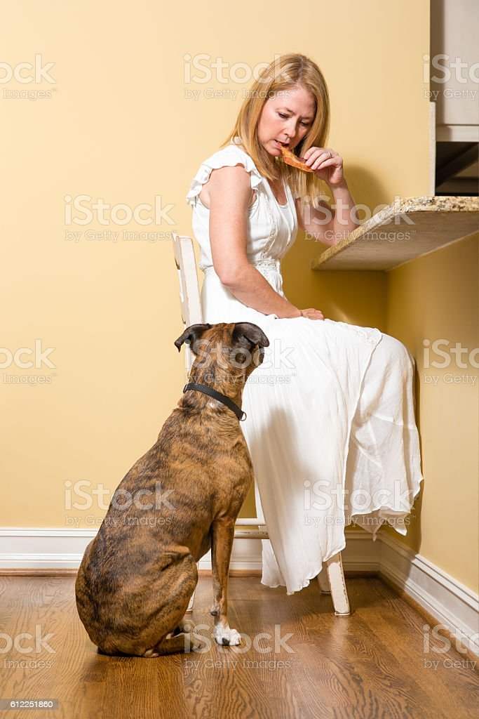 Dog begging for bacon at kitchen counter stock photo