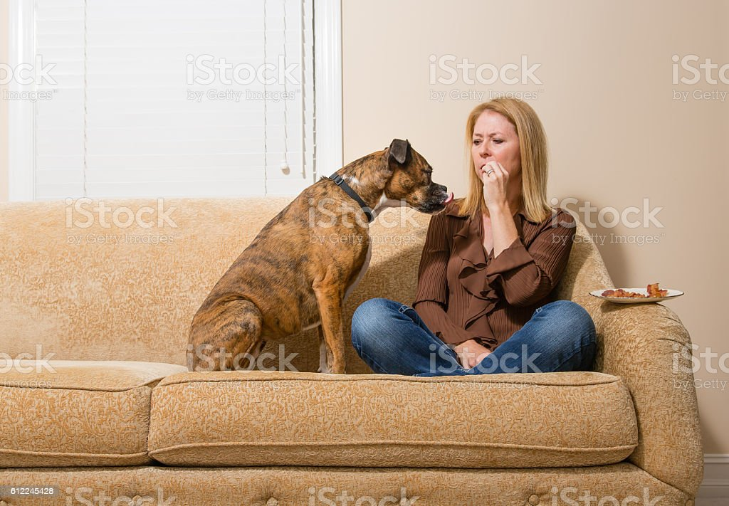 Dog begging for bacon stock photo