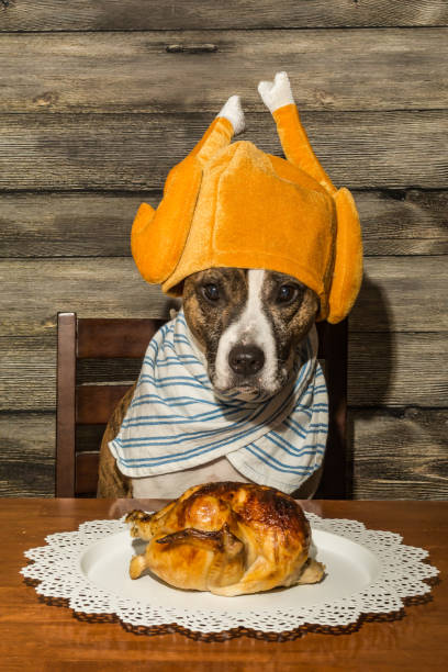 Dog Begging for Food A cute dog begging for the holiday dinner. thanksgiving pets stock pictures, royalty-free photos & images