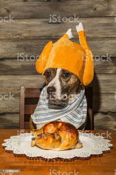 Dog begging for food picture id1133880451?b=1&k=6&m=1133880451&s=612x612&h=da3 5vgc lf0nvblcx5id ayloa3ejwqug5cbf1 koo=
