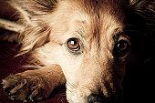 istock Dog begging 157559256