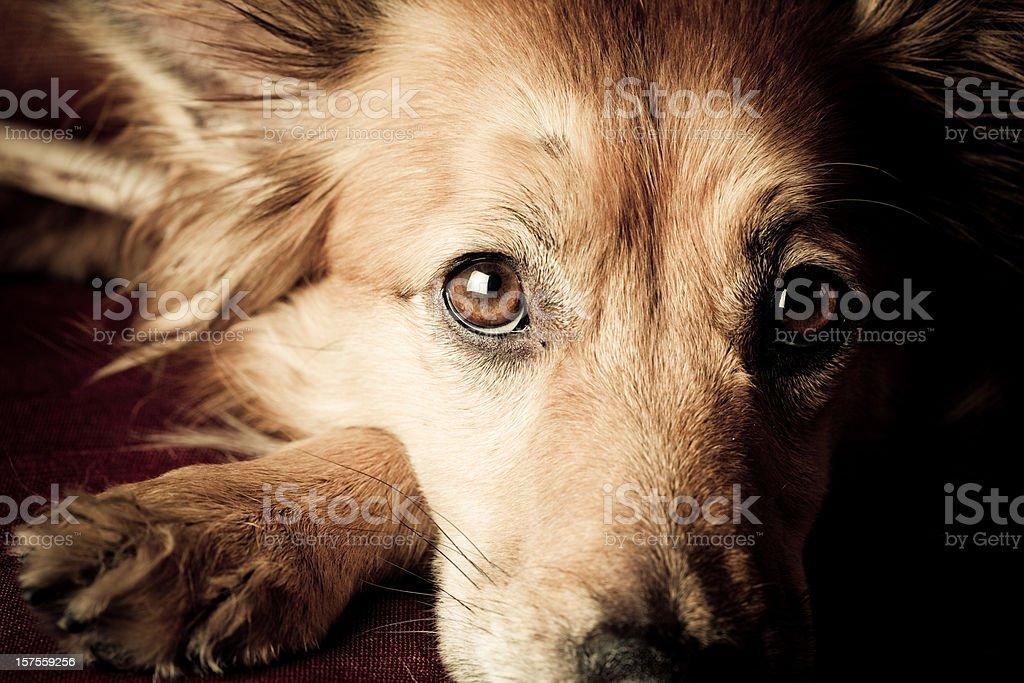 Perro mendicidad - foto de stock