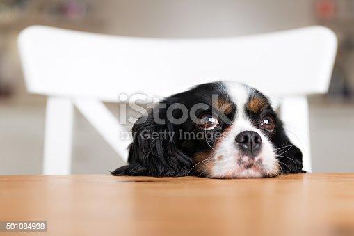 istock dog begging 501084938