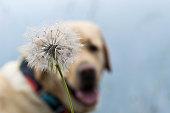Primer plano de una flor con un perro de fondos