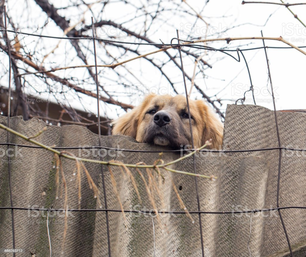 dog behind a fence stock photo