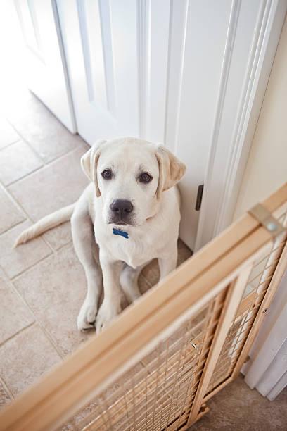 Hund hinter dem Tor – Foto