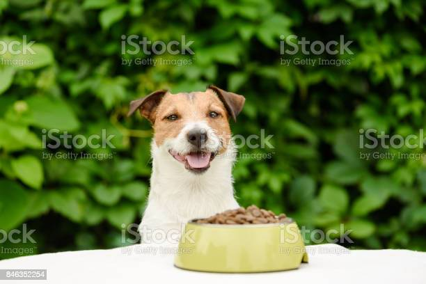 Dog behind table with bowl full of dry food picture id846352254?b=1&k=6&m=846352254&s=612x612&h=d qngc7gsr8sykrq uk6upxn5fn7 da1ummcc0wufx4=