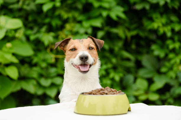 dog behind table with bowl full of dry food - dog food imagens e fotografias de stock