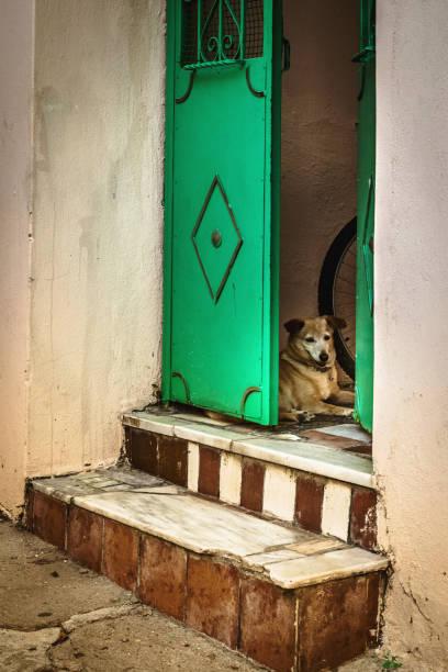 Dog behind the fence door stock photo