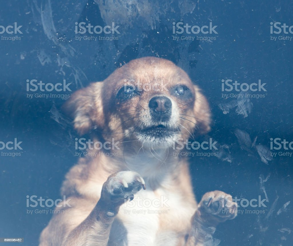 Dog behind the glass stock photo
