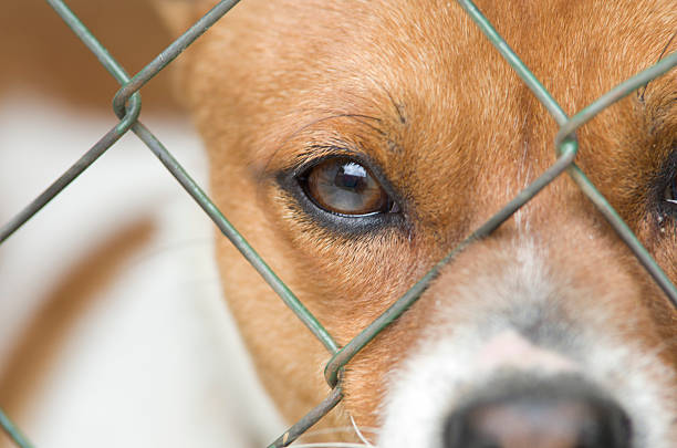 Dog behind wire mesh stock photo
