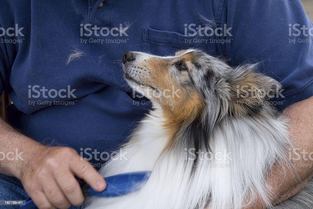 Dog being brushed. stock photo