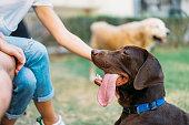 istock Dog Best Friend 1050683554