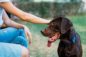 istock Dog Best Friend 1050686024