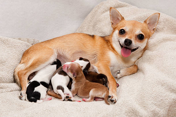 Dog birth  newborn animal stock pictures, royalty-free photos & images