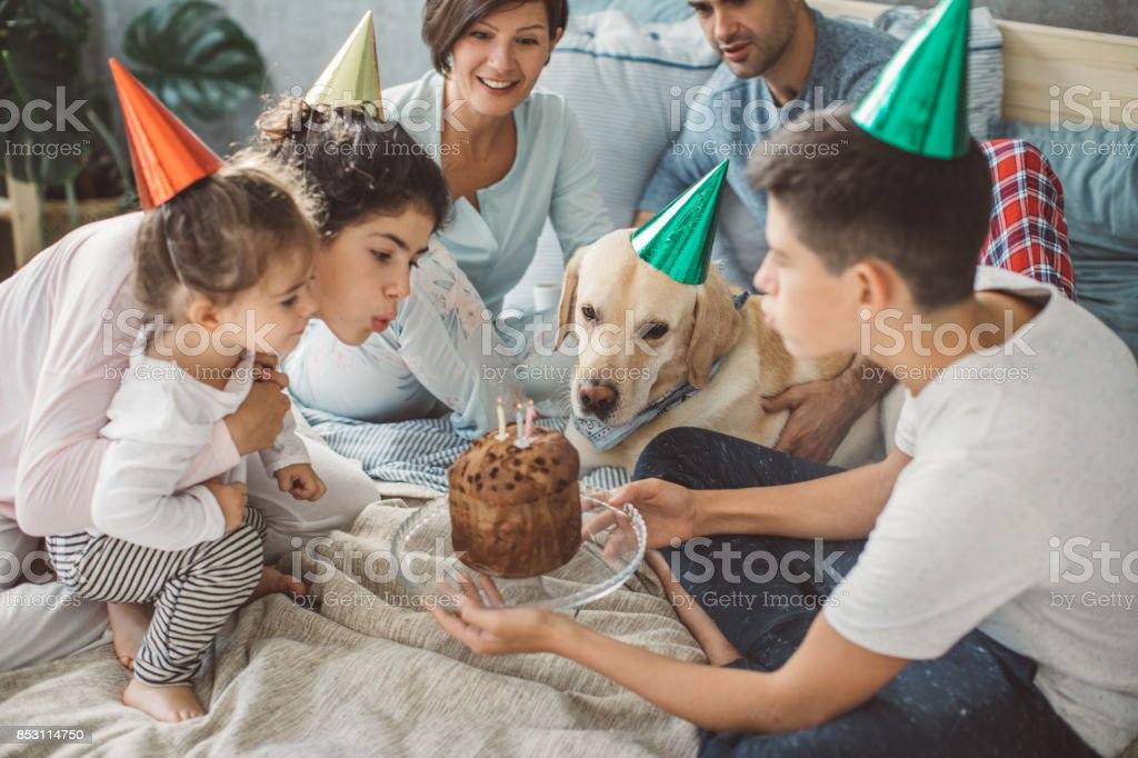 Dog birthday celebration stock photo