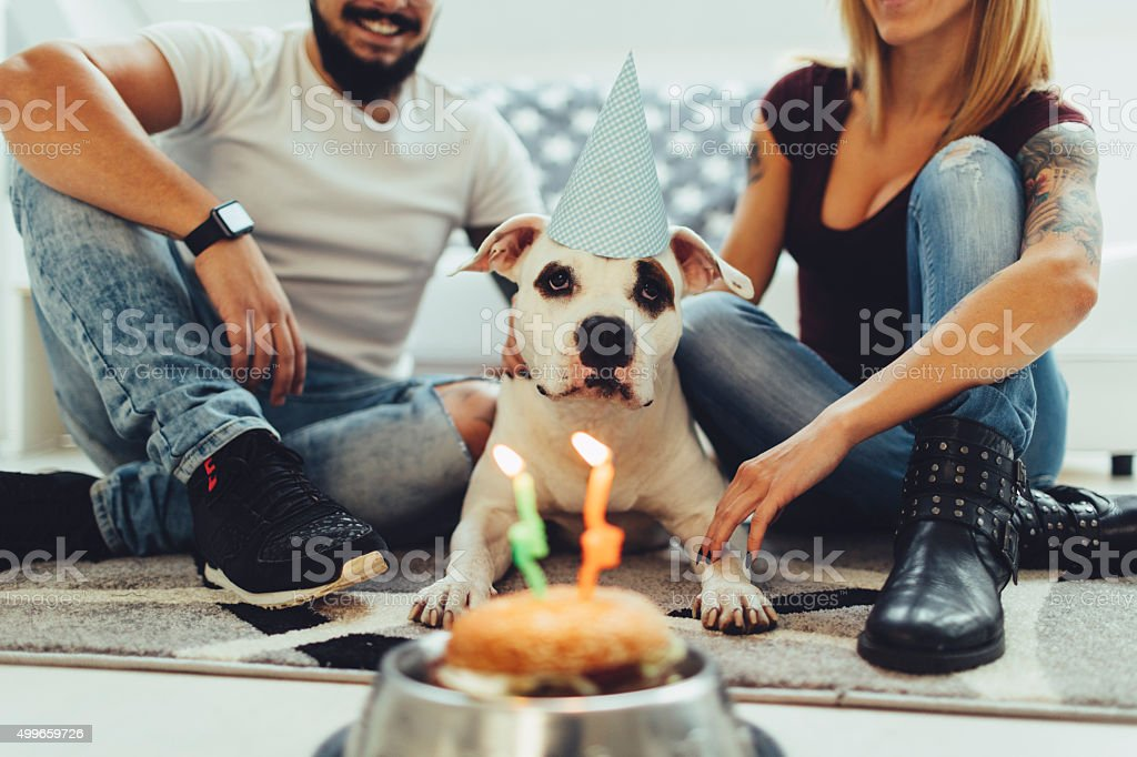 Dog Birthday Party. stock photo