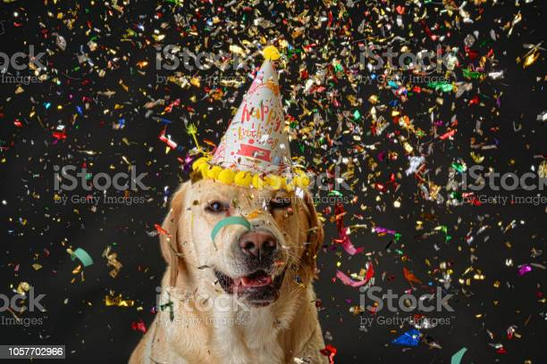 Dog birthday picture id1057702966?b=1&k=6&m=1057702966&s=612x612&h= txk72c0ufhcm5xx3qpcrnrqi0tokh ihuw aef7exe=