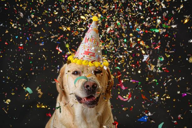 Dog birthday picture id1057702966?b=1&k=6&m=1057702966&s=612x612&w=0&h=93lh8xapi6ph9cjcqkixttz4hf0wbn4j px148mmfr4=
