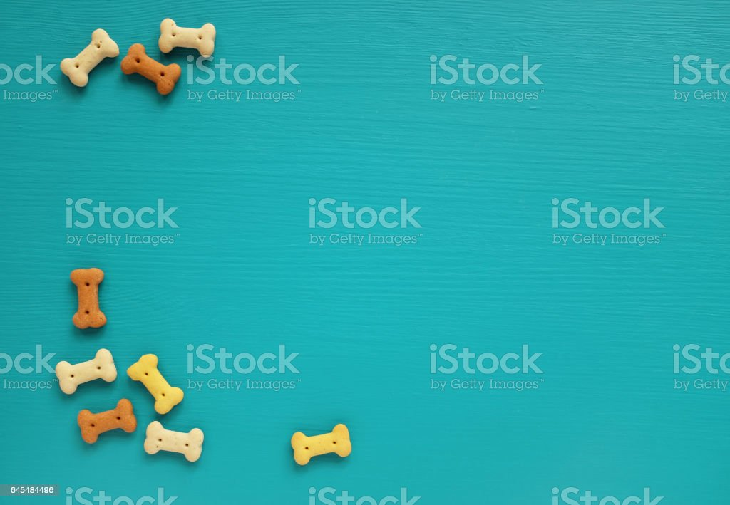 Dog biscuits scattered on a turquoise background stock photo