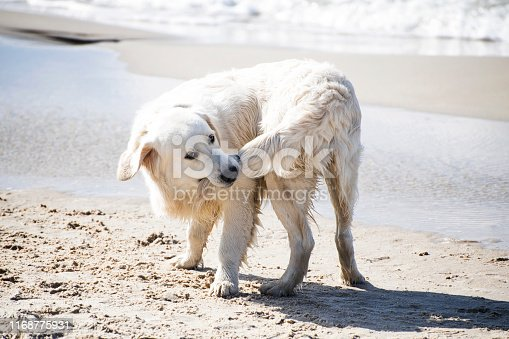 Dog biting his tail on a summer Baltic seashore.