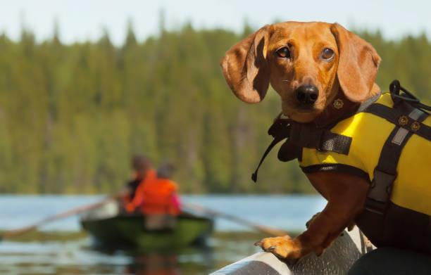 Dog boat trip stock photo
