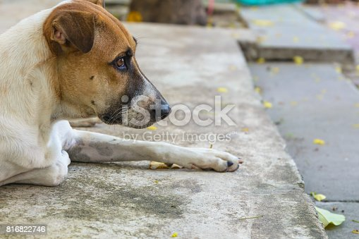istock Dog body language. Animal background 816822746