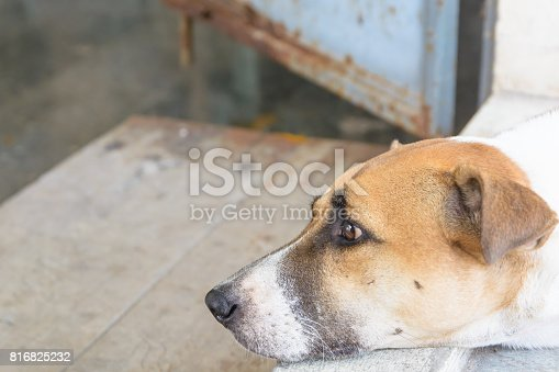istock Dog body language. Animal background 816825232