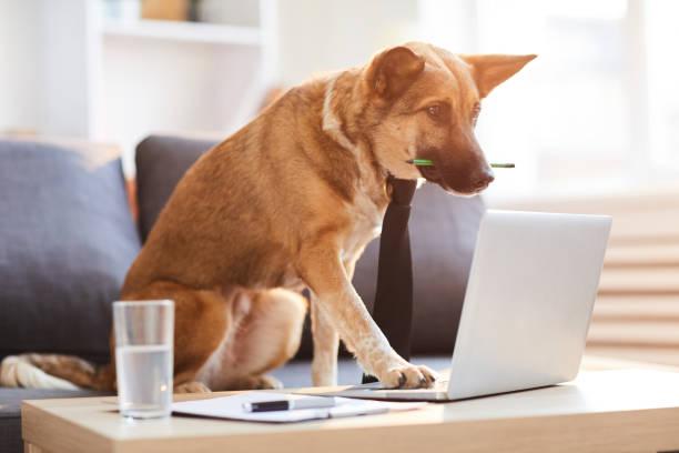 Dog Boss stock photo