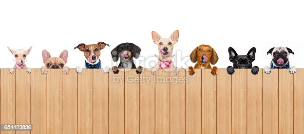 istock dog bowl 654423836