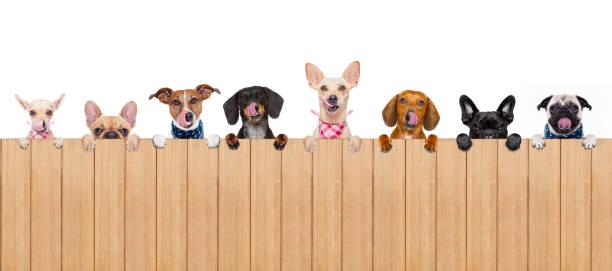 Dog bowl picture id654423836?b=1&k=6&m=654423836&s=612x612&w=0&h=o yp7fkcsi4cayfluomg1hsg6h7 mnym3fyxqmwzixo=