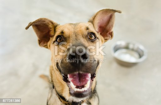istock Dog Bowl 877281386