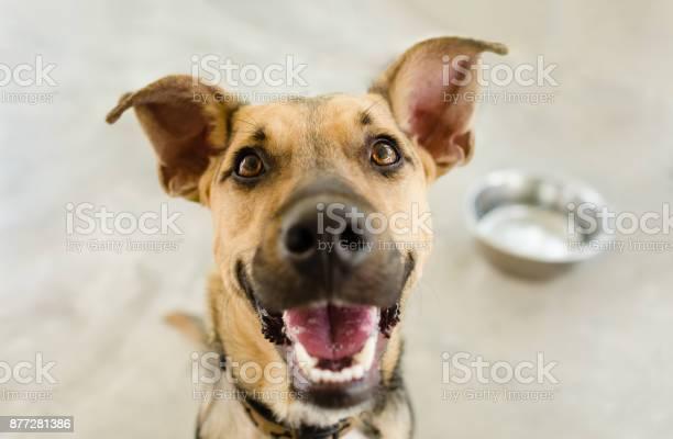 Dog bowl picture id877281386?b=1&k=6&m=877281386&s=612x612&h= 5jhznsvqraupaq1zxxemobjlflo7adyvs7u pozc4s=