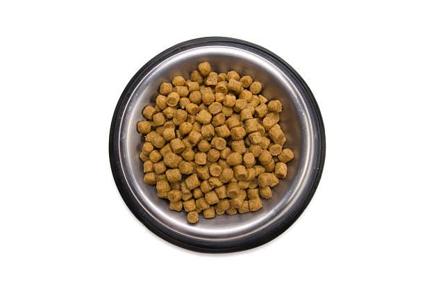 Hund-Bowl-Serie – Foto