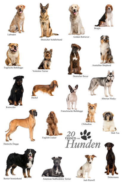Dog breeds poster in German stock photo